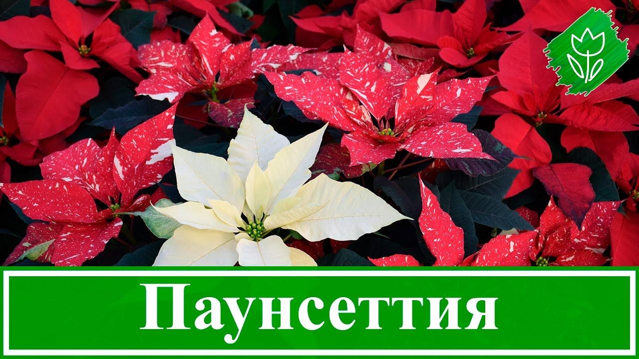 Интерьер обои с цветами сочетание