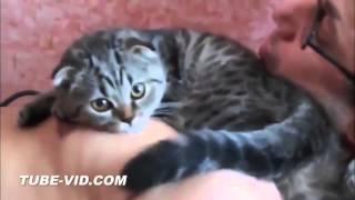 Смешные коты  - 2015. Funny cats.