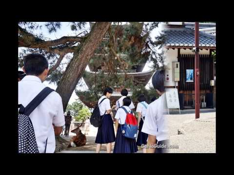 Kofukuji Temple /Slideshow/