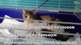 [Актуально] Избитая кошка ищет дом.