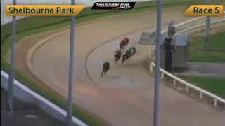 Irish Derby 2017 - Round 1 Heat 3 - Clona Kid & Droopys Cabaye