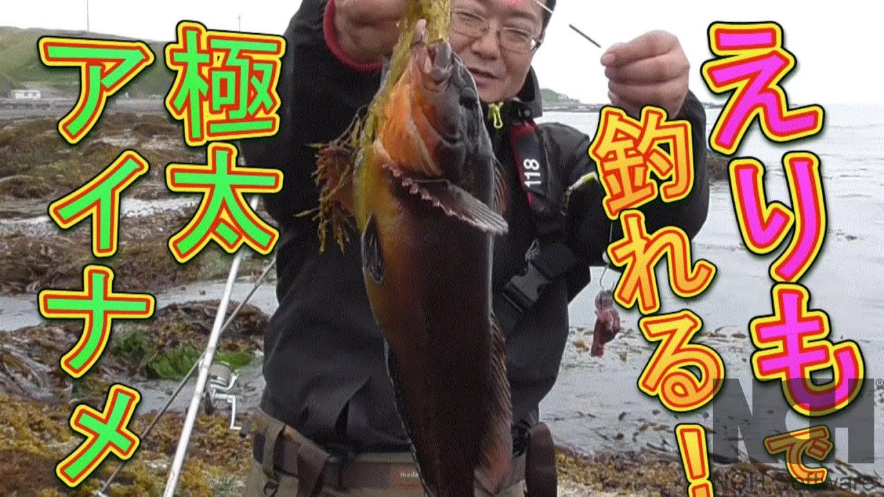 【襟裳釣り】太っといウサギアイナメが!入れ食い!!