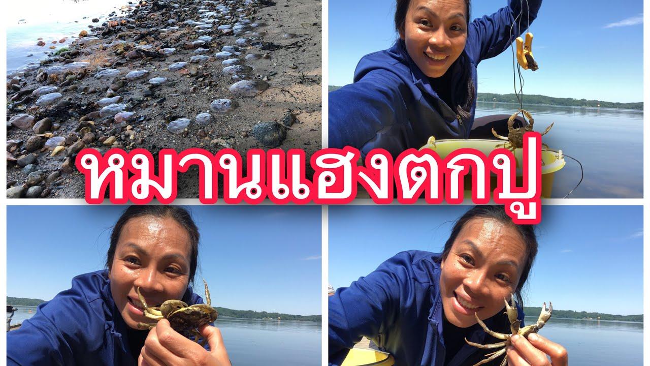 ตกปูเดนมาร์กเยอะมากแมงกระพรุนเต็มทะเล#catching crab 🦀#2/7/20.