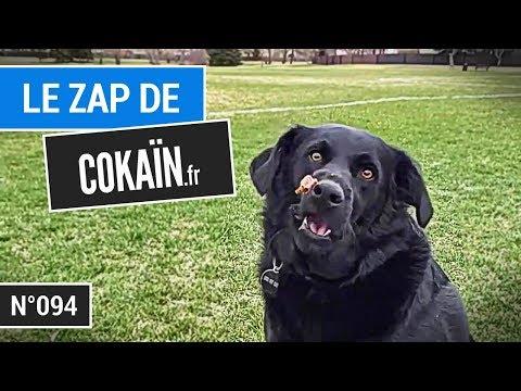 Le Zap De Cokaïn.fr N°094