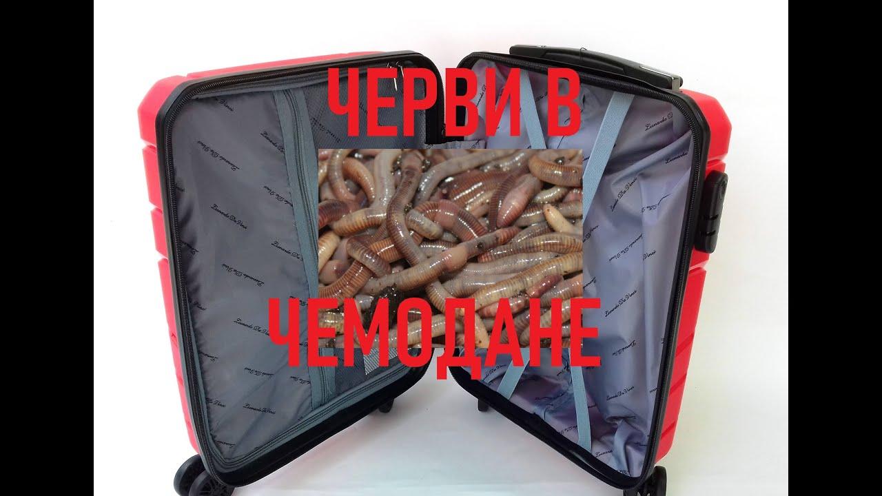 ВЕРМИЧЕМОДАН. Разведение червей в чемодане.