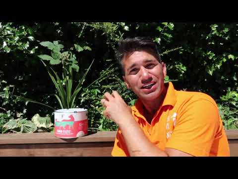 Painting Timber Raised Beds with Thorndown Wood Paint and DIY Doer Wayne Perrey