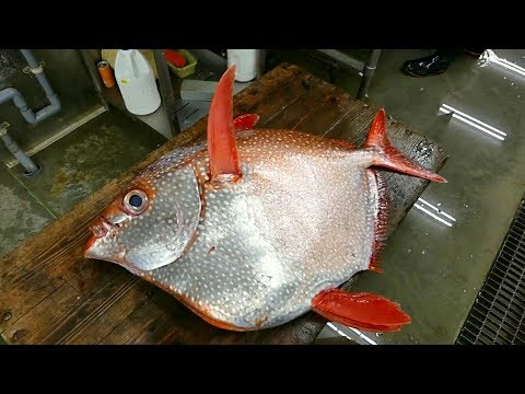 Японская Разделка Гигантская Рыба Опах Япония Морепродукты.