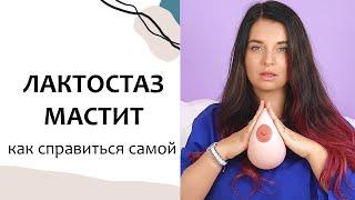 массаж, профилактика мастита. Уплотнения в груди у кормящей суки