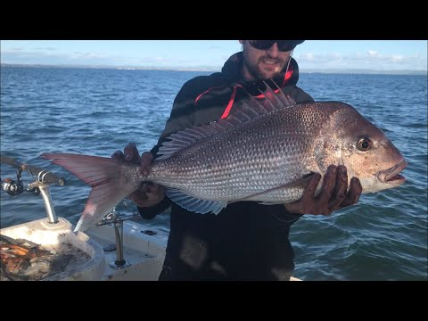 Westernport Snapper Fishing October 2020