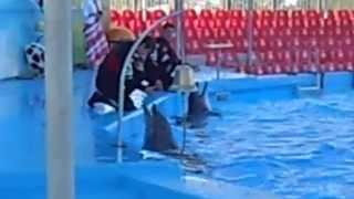 Дельфины поют песню в Бердянском дельфинарии