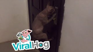 Smart Cat Opens Door || ViralHog