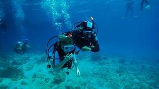 Discover Scuba Diving Mallorca - Skualo