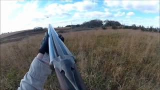 Pheasant hunting with my Vizsla