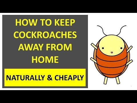 How To Keep Cockroaches Away From Home Naturally