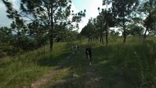 Perros en realidad virtual | Episodio #60