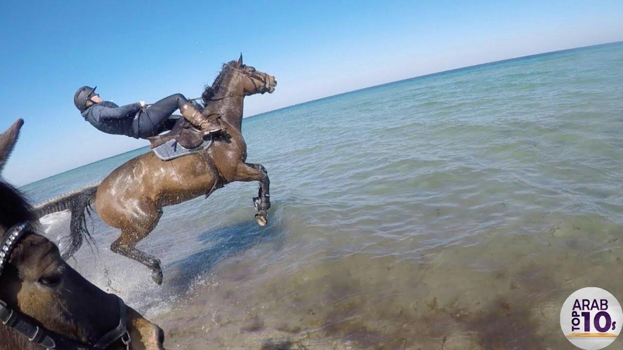 هذا الحصان حاول السباحة أنظر ماذا حدث له  !!
