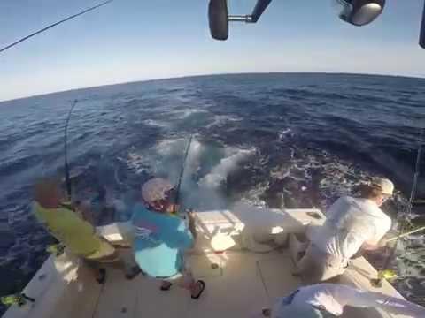 Catching Mahi Offshore Hatteras
