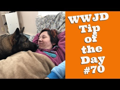 What Would Jeff Do? Dog Training Tip of the Day #70