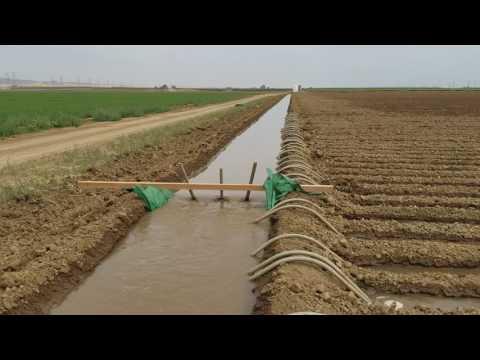 Trabajo De Campo California  EU,  Sistema De Riego Por Agua Rodada thumbnail