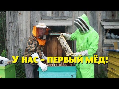 Первый мёд от наших пчёл и другие подарки на день рождения!