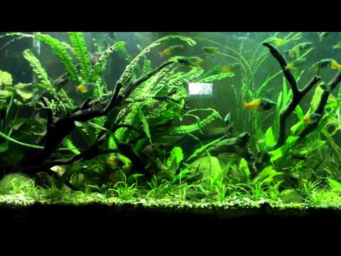 How To Keep Farlowella Catfish: Species Sunday. Pumped Update On The 220 As Well