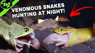 FEEDING VENOMOUS SNAKES AT NIGHT!!!