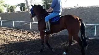 hall racing stables