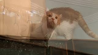 猫と引っ越し 家を探検中に何を見て驚いたの?怖いのは嫌ですw thumbnail