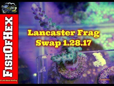 That Fish Place Frag Swap 1.28.17