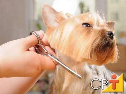 a50b926fe Curso Como Fazer Banho e Tosa em Cães - Tipos de Tosa - Cursos CPT ...