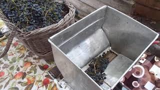 """Вино из """"Изабеллы""""- ЯД. Три главных и куча мелких ошибок в виноделии.Ч.1."""