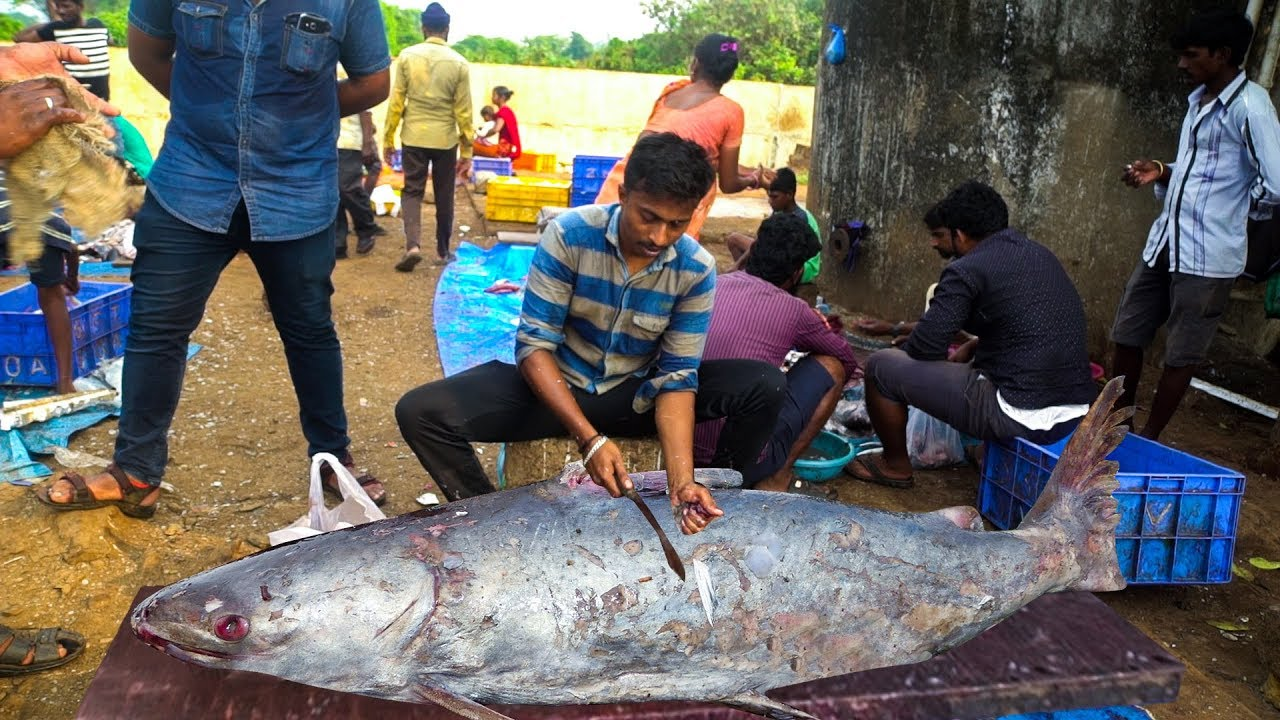 Live Fish Cutting | 2019 Fish Cutting Market | Fisherman