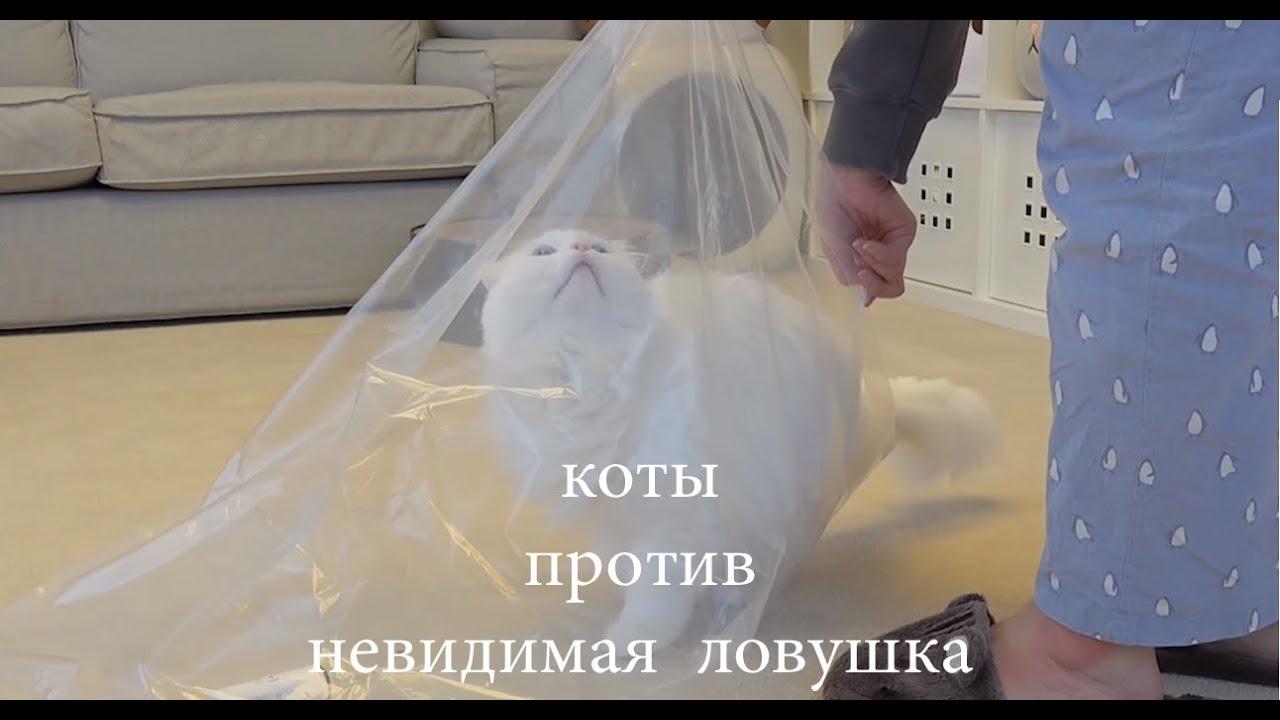 """""""Самый милый кот"""" Очень забавный котенок - Самый смешной ..."""