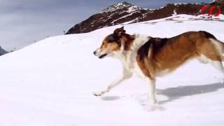 CamOneTec: Running Dog