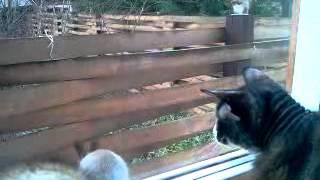 Кошка vs белка