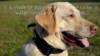 Training Nylon Dog Collar With Comfortable Handle