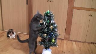 クリスマスツリー、猫に囲まれ早々に役目を終える