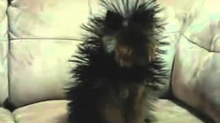 позитивное видео, смешное видео, смешнее смешного видео, юмор, видео про животных, видео приколы