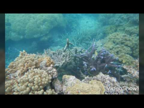 Diving south pacific