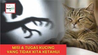 Inilah Yang Dilakukan Kucing Saat Kita Tidur -  Mitos Atau Fakta