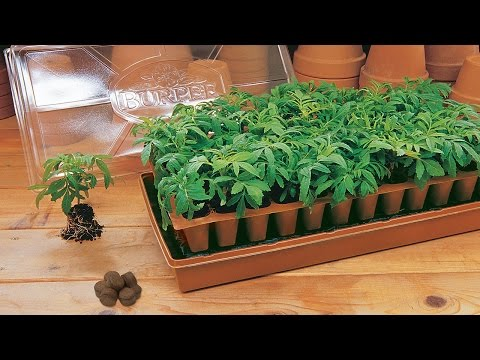 Mung Bean Sprout Seed Seeds And Plants Vegetable Gardening At