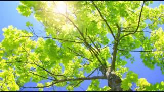 видео «Маша и медведи» синхронизируются с солнцем