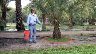 Fertilization of Palms in the Landscape