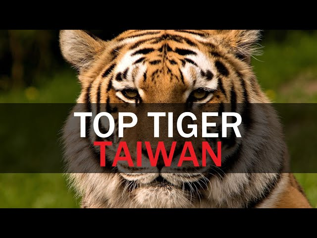 Top Tiger Taiwan | Taiwan Insider | Nov. 7, 2019 | RTI  | Taiwan News | RTI
