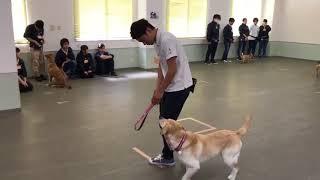 動物専門学校 トリマー 動物看護師 アクアリウム 動物のお仕事 GCT練習①(犬とのすれ違い) thumbnail