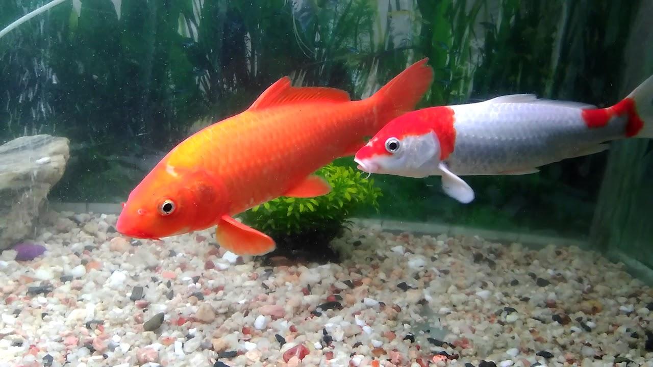 Brundavan Garden Mysore aquarium - YouTube