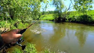 ЧТО ТВОРИТСЯ НА ЭТОЙ РЕКЕ Каждая поклёвка отдай спиннинг Рыбалка на малой речке с берега