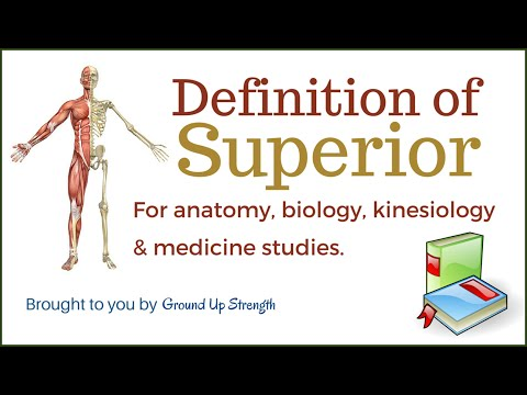 Superior Definition (Anatomy, Kinesiology, Medicine)