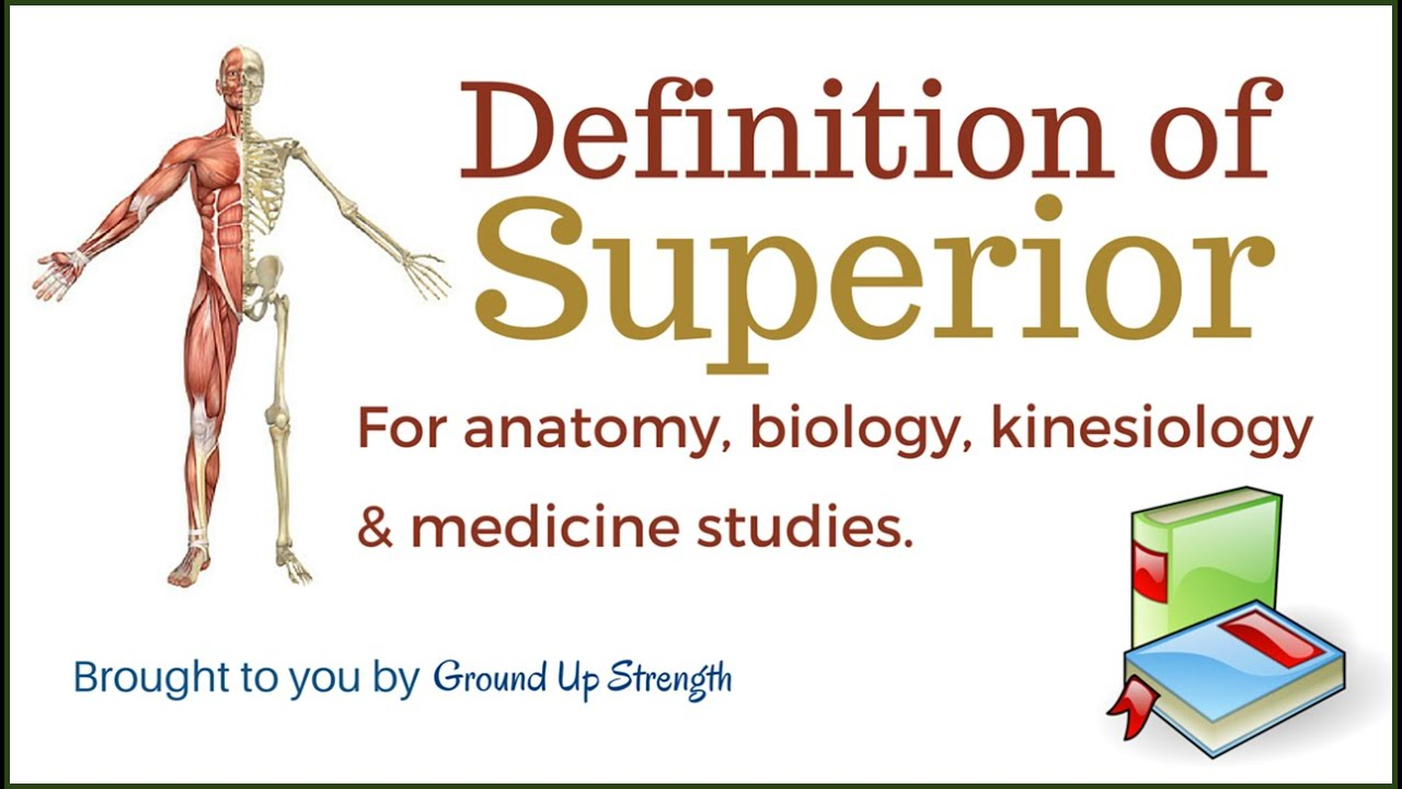 Superior Definition (Anatomy, Kinesiology, Medicine) - YouTube
