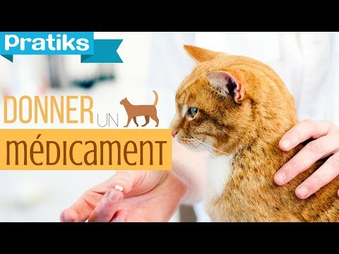 Comment faire avaler un médicament à son chat